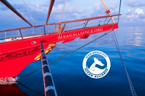 Ocean Alliance - Copyright Statement