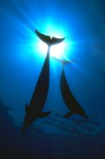 Ocean Alliance - Mission Statement