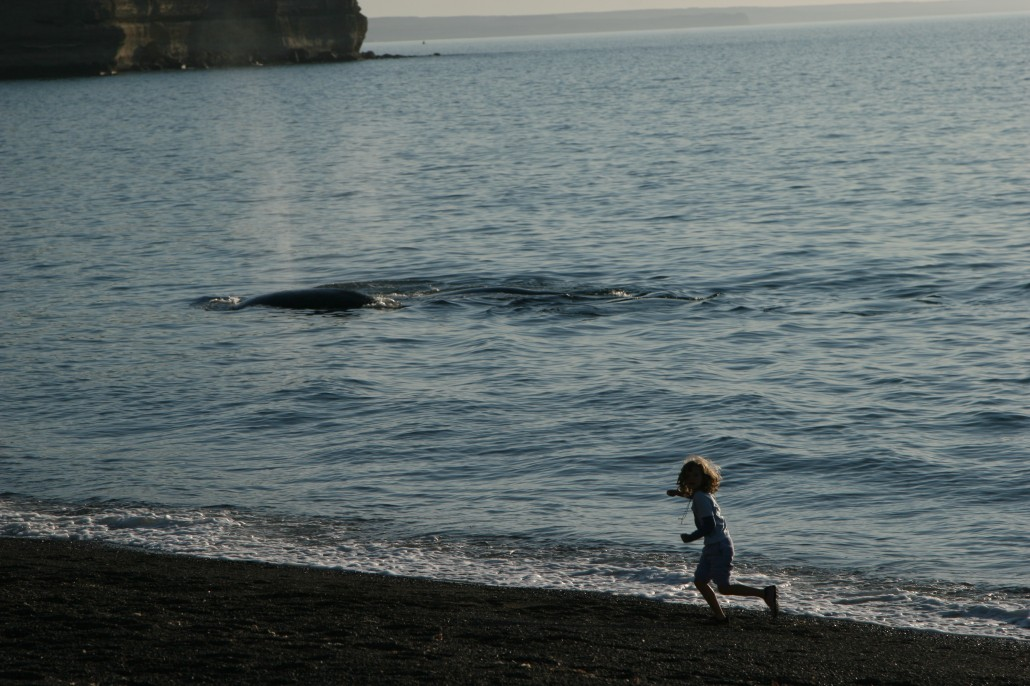 Dylan Kerr Running With Southern Right Whale 2008 - Photo by Iain Kerr