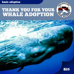 basicadoption