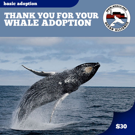 Basic Whale Adoption