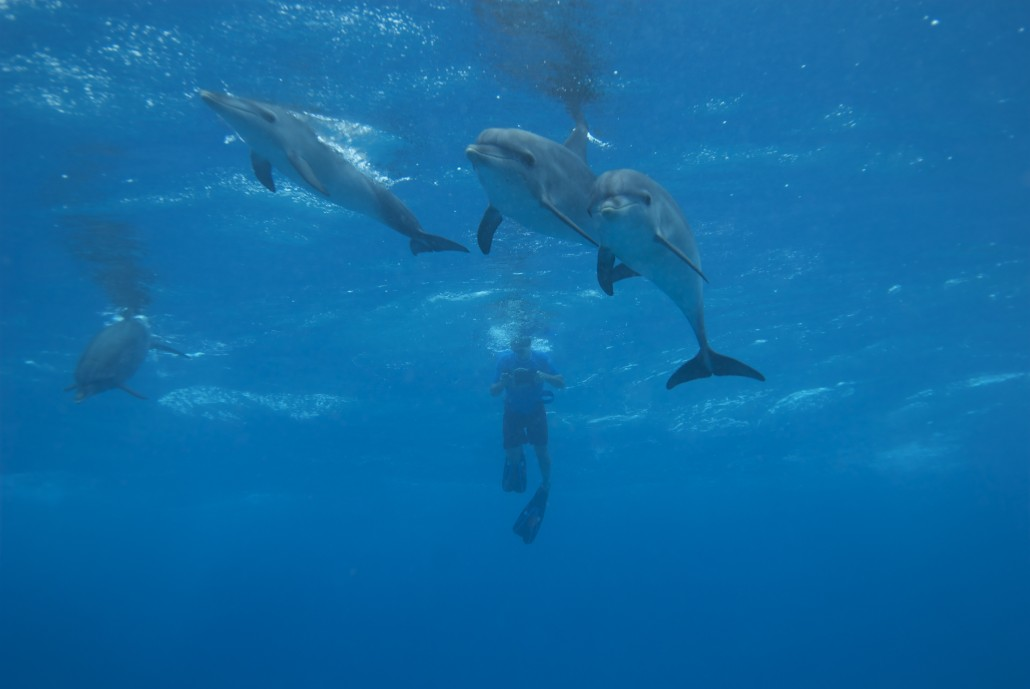 Iain Kerr with Atlantic Spotted Dolphins - Photo by Leonard Aube