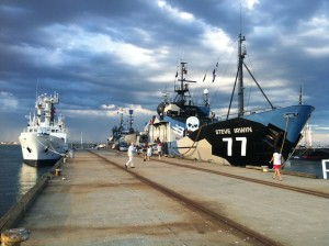 Sea Shepherd fleet - photo by Iain Kerr