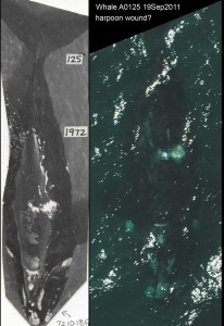 Whale 125 in 1972&2011
