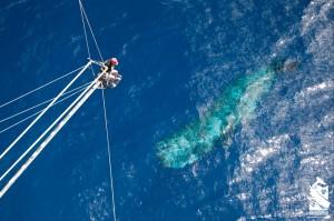 Iain Kerr with sperm whale