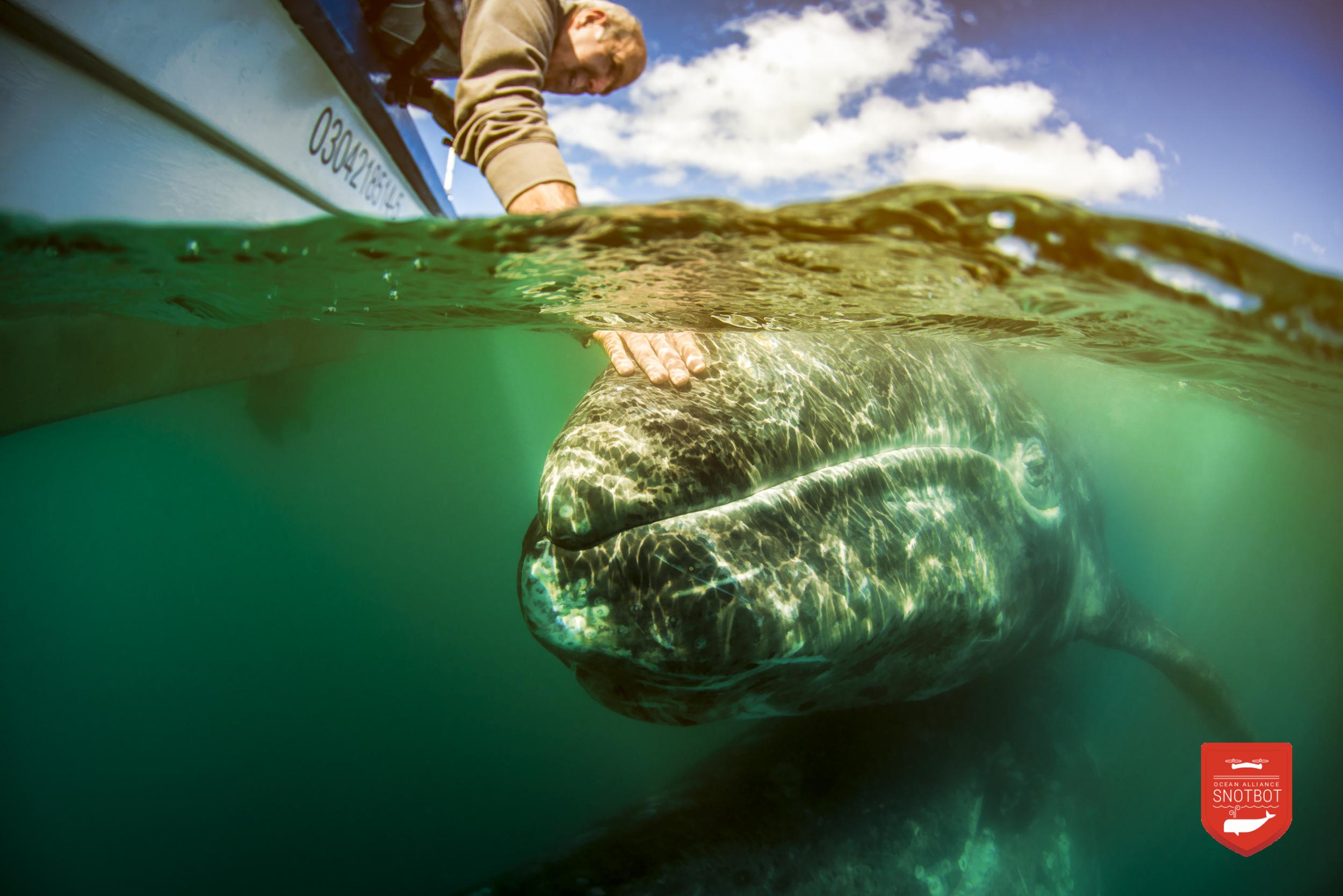 Ocean Alliance Mexico expedition. Photo: Christian Miller